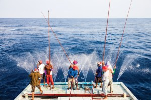 Maldives pole and line fishery