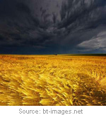 stormed-grain
