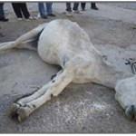 """Burrita torturada y asesinada """"por diversión"""" a manos de unos jóvenes en Torreorgaz (Cáceres)"""