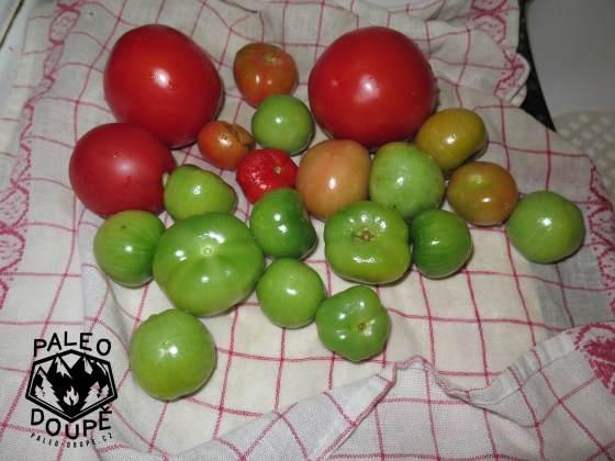Moje rajčata