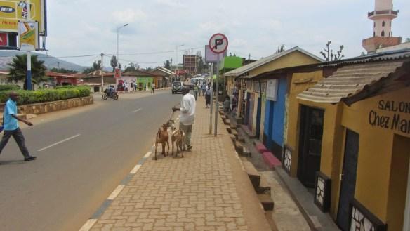Um homem passeia com seus bodes na Ruanda de hoje