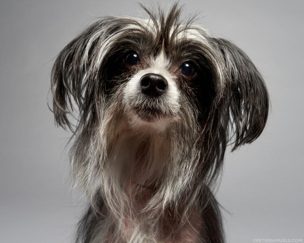 peter.samuels.dog.pet.comercial.photographer.pet-4