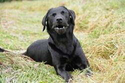 Small Of Reverse Sneezing Dog