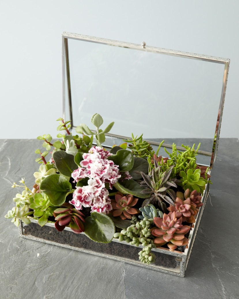 nb-succulent_box-1