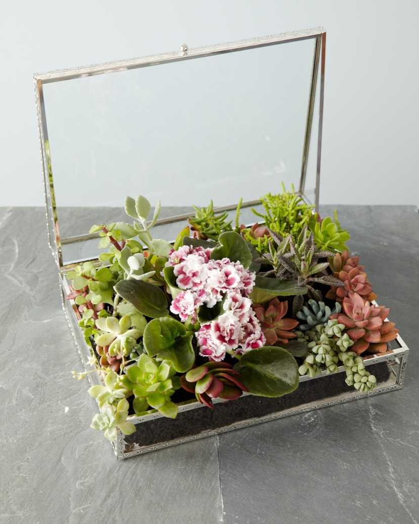 nb-succulent_box-5