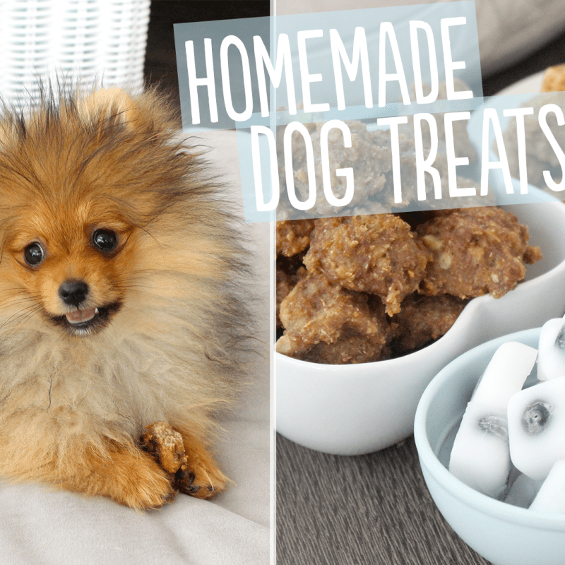 dog-treats-thumbnail-3-png-format