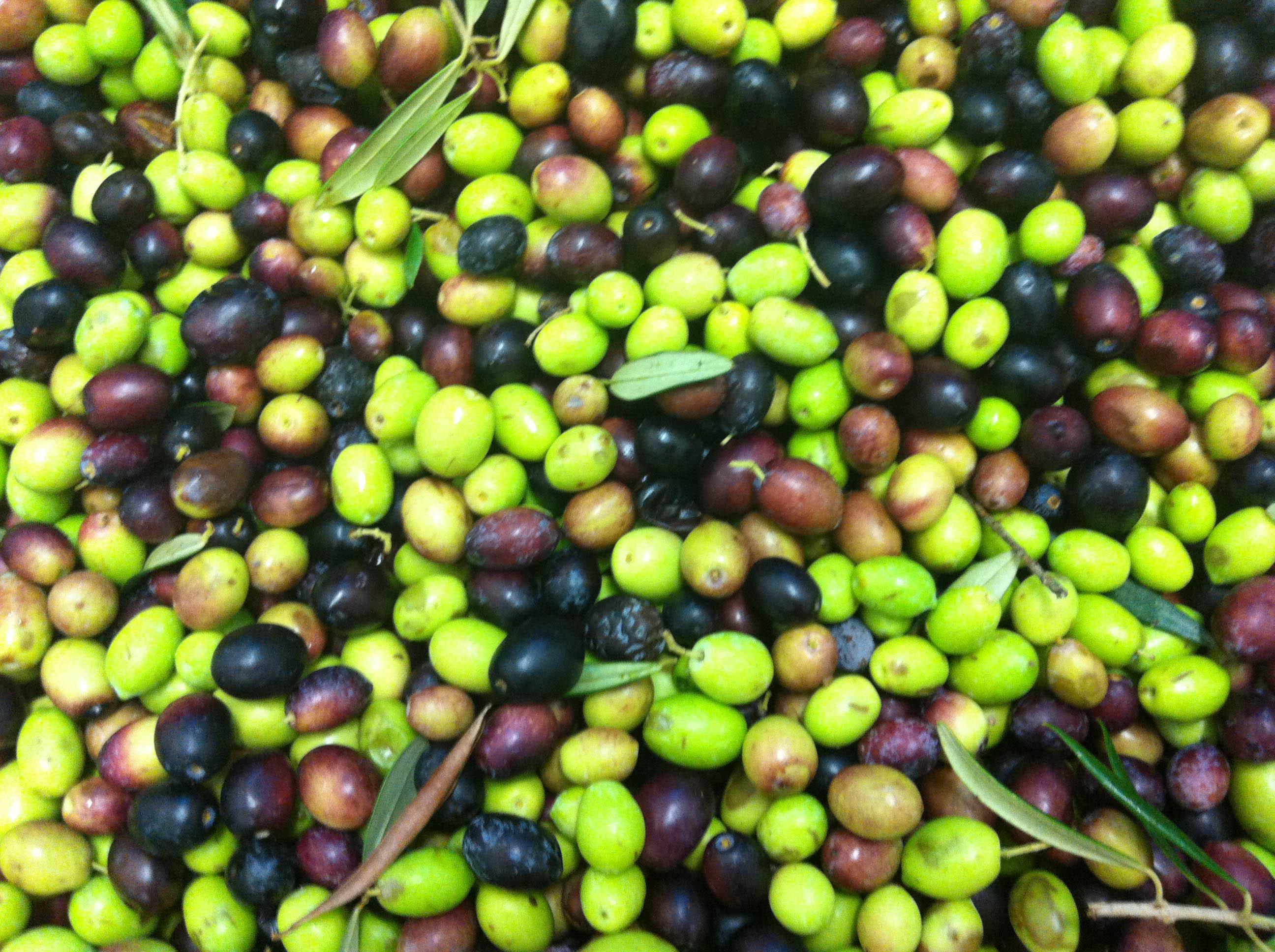 Per Natale regala un diamante: il vero olio extravergine di oliva