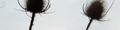 pochette-Cvantez-couv