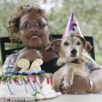 世界一の長寿犬 長生きの秘密は・・・