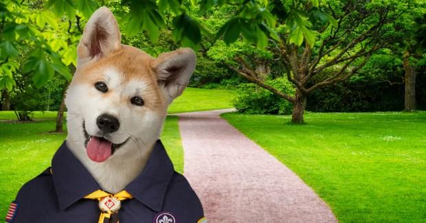PuppyScout2