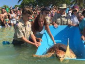 Bubbles the sea turtle 1