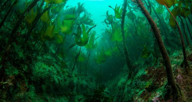 04Wide Angle Category 3rd Place, Kelp Life Doonee by Sarah Tallon