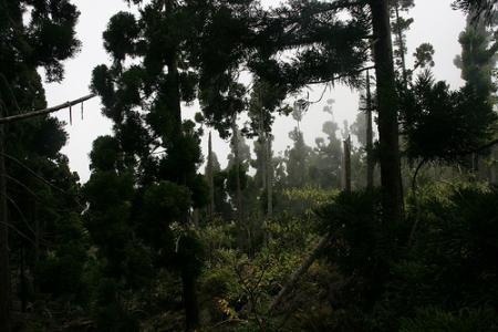 Ile de la Réunion - janvier 2011 - 052