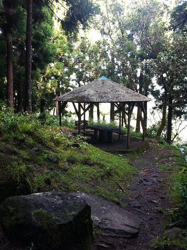 Ile de la Réunion - janvier 2011 - 631