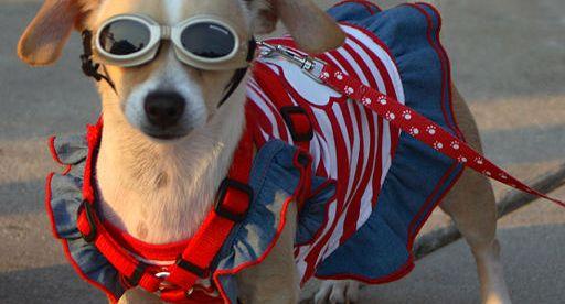 American Sunglasses & Eyeglasses Brands