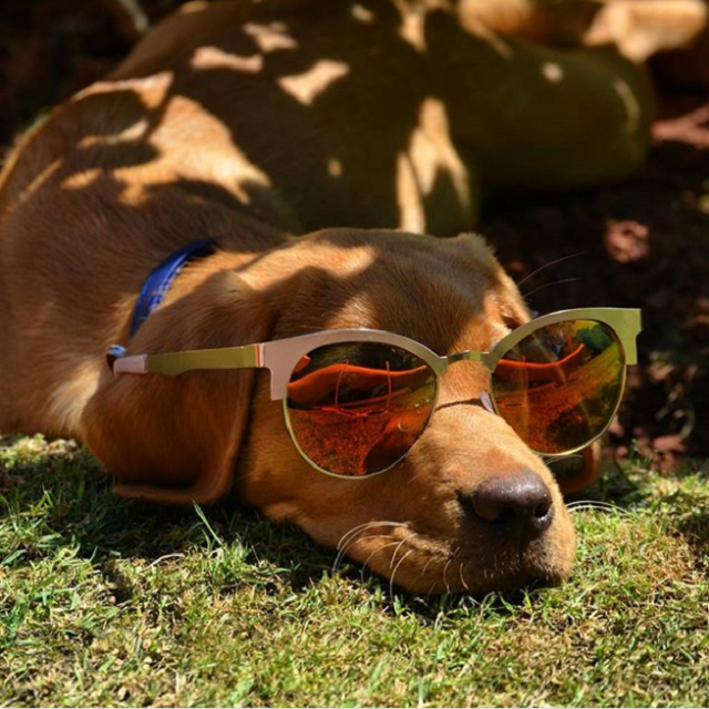 dogs with sunglasses
