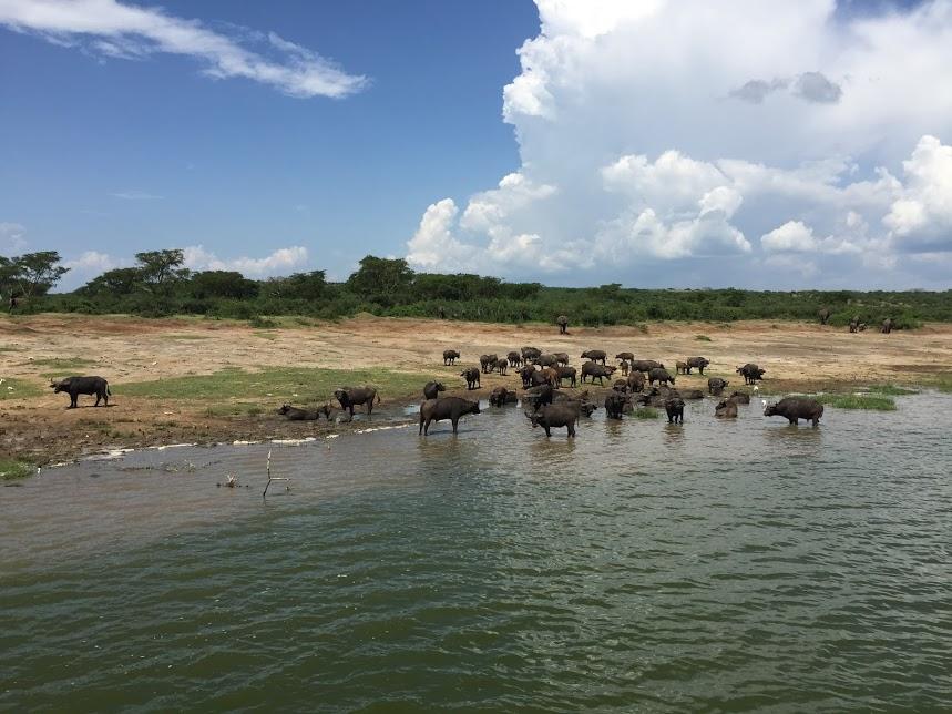 こちらは象とバッファローとカバと…あと…色々います!