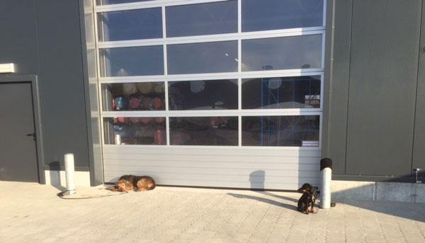 swafing_stoffschutzhunde