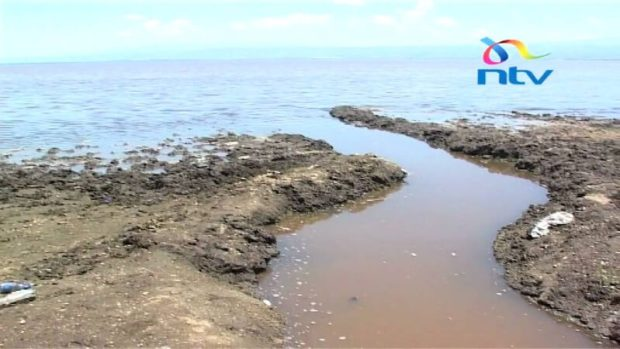 Mysterious deaths of thousands of fish in the Lake. The lake has been struggling to survive in the last decade due to intense pressure from human activities. Via: Credit - Youtube The runoff, pesticides, and chemicals used to grow these flowers near the shores are drained right back into the lake.