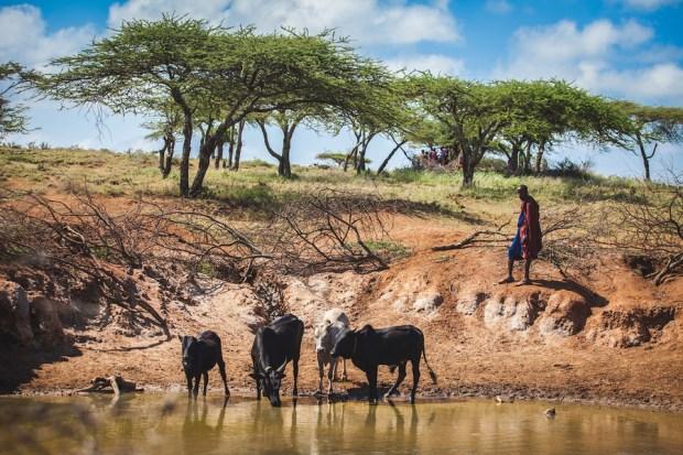 Guardians of Health: Maasai Pastoralists at the crossroads between animal and human disease in Tanzania and Kenya