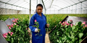 Kenya: Doom Over The Worlds Chief Supplier Of Flowers