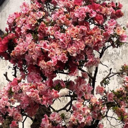 """This is a bonsai tree."""