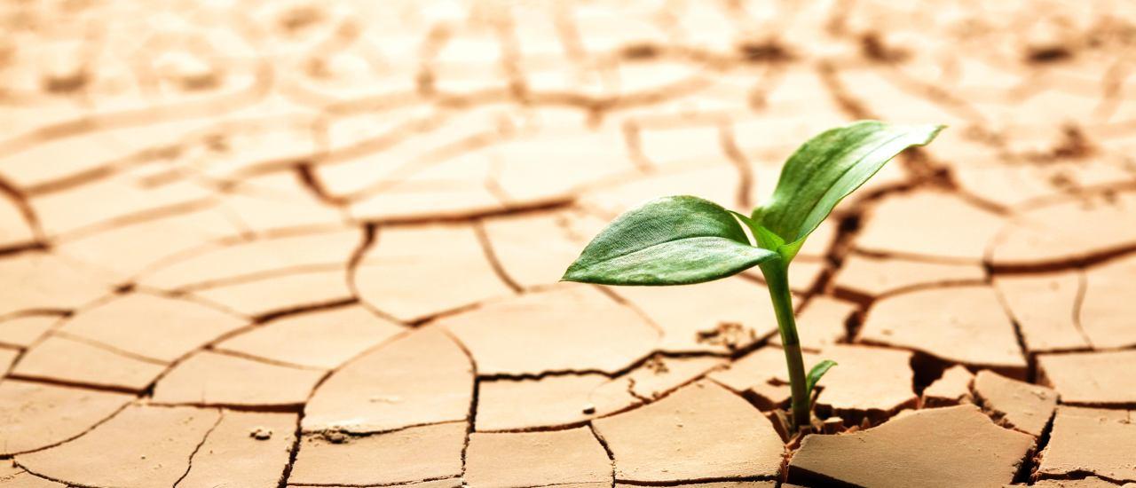 6 pasos para mejorar nuestra resiliencia
