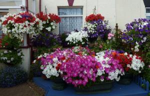 Jean Willis' Container Garden