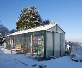 Top tips for your garden in winter