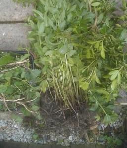 A Beginners Guide to Growing a Veg Garden