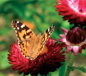 Big Butterfly Count photo competition