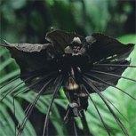 bat-plant