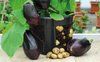 Egg & Chips® – Another World First in 2-in-1 Cropping