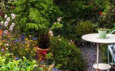 10 Years in my Garden