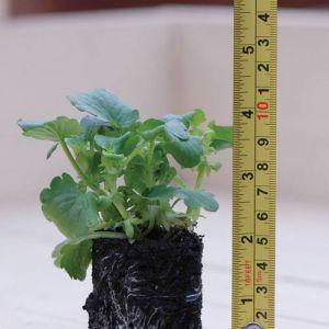 Garden-Ready-Plant