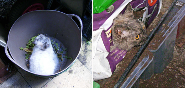 Cats in the rubbish and the compost!
