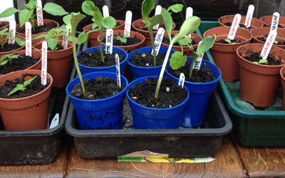 Seed sowing and potting plugs during April