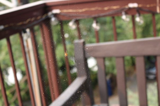 A large golden-orange spider sits in the center of a geometric web with hundreds of tiny white flecks of ash caught in it. In the background is a brown balcony railing with decorative light bulbs. The background is the out of focus green of our neighbor's trees.