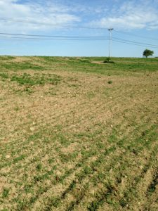 Poor establishment of a spring forage seeding due to dry conditions.
