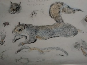 Oriel Ynys Mon have an extensive collection of drawings by Charles Tunnicliffe