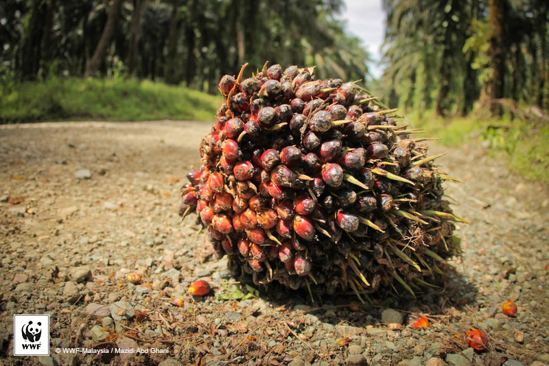 Choose F&B products that use sustainable palm oil.