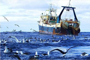 Iwi_Losing_Fishing_Industry1