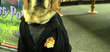 harry-potter-perro