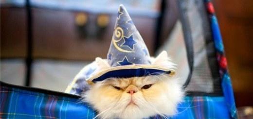 Harry Potter BlogHogwarts Gatos (3)