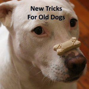 new-tricks-old-dogs-millennials-social-media