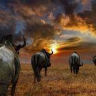fotos_africa (20)
