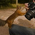 reacoes_animais_cameras