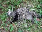 Catmouflage1