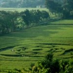 crop circle ufo sleman