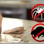 A rovarok és az egerek ellen a teafilter a megoldás